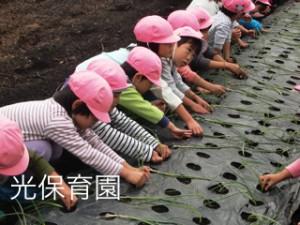 2015-10_玉ねぎの苗さし