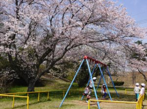 H29-04-14_平成29年4月14日 お花見遠足 4
