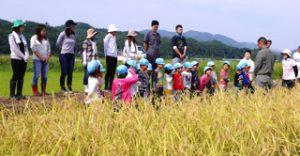 h29-9-5_平成29年9月5日 稲刈り 0